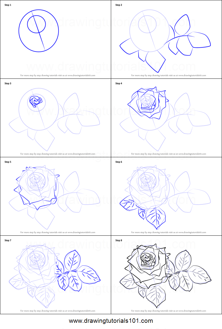 Step by step drawing tutorial on how to draw red rose