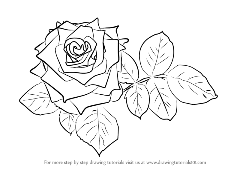 instructions on how to draw a rose