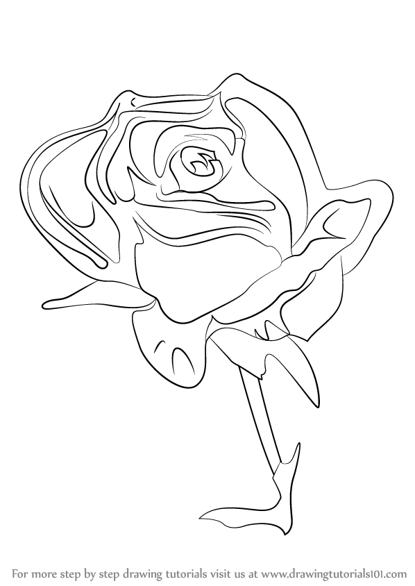 Learn how to draw a rose flower rose step by step drawing learn how to draw a rose flower rose step by step drawing tutorials ccuart Image collections