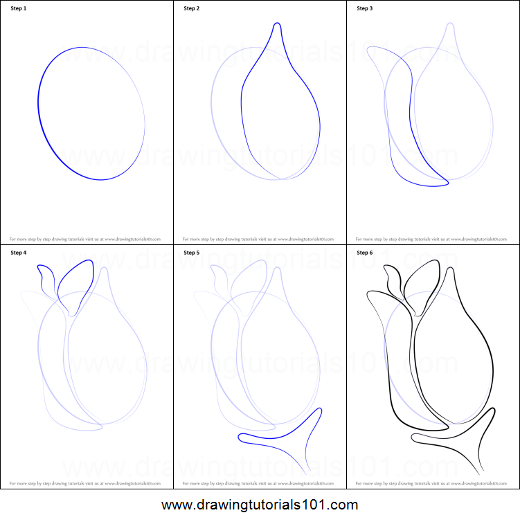 Drawing step by step rose image titled draw a rose step Teach me how to draw a flower