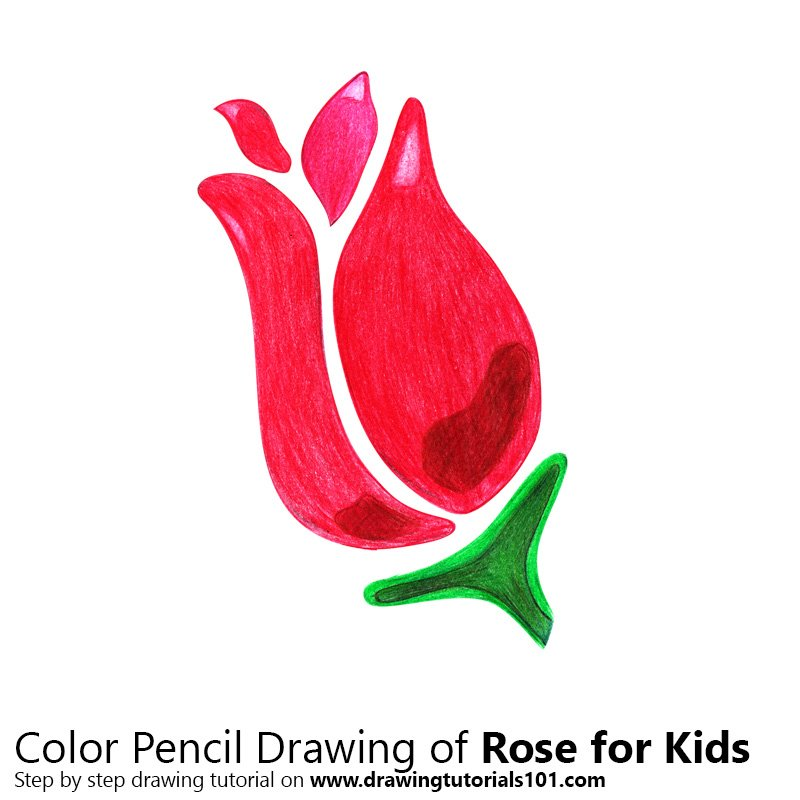 Rose for Kids Color Pencil Drawing