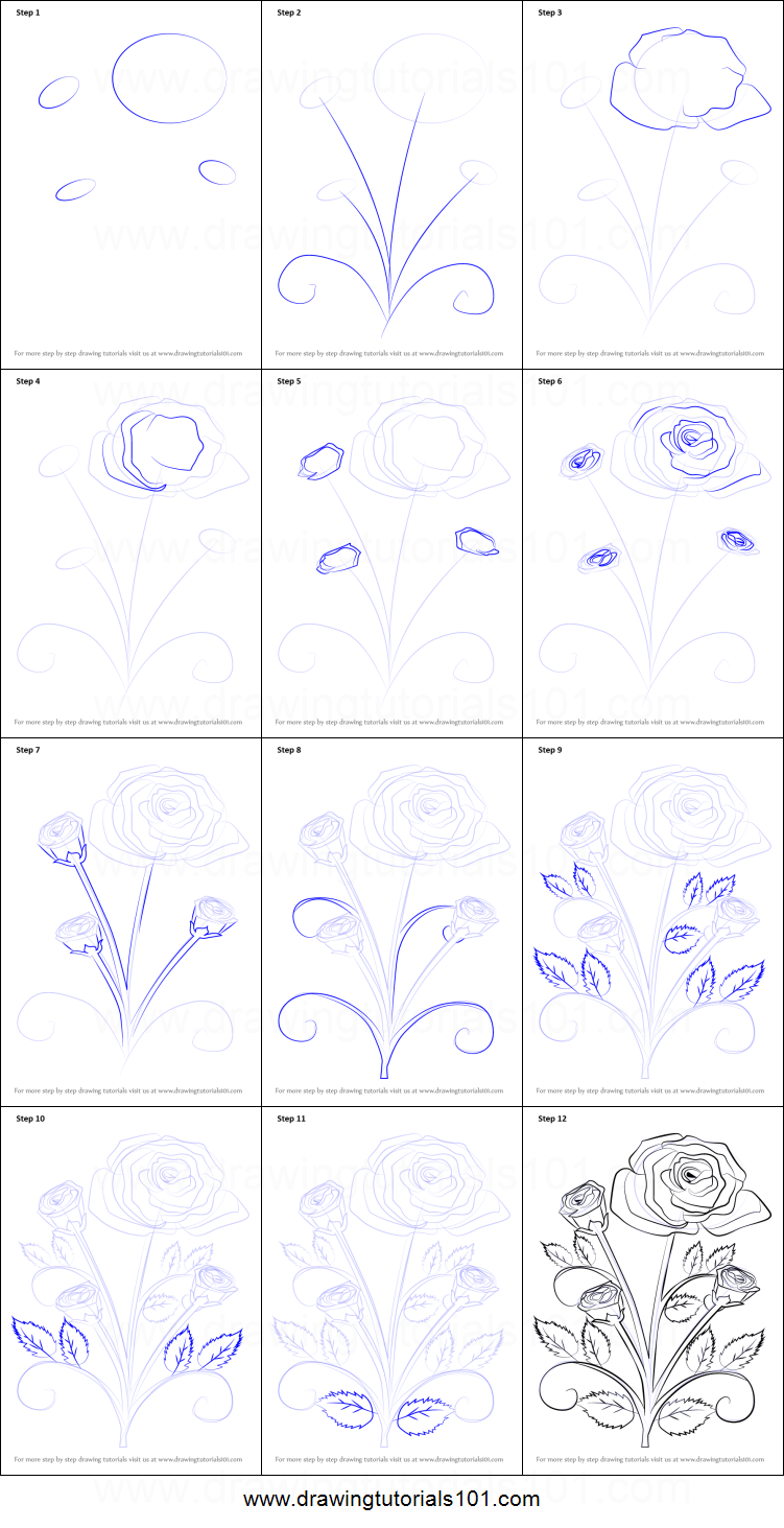 How To Draw A Rose Bush Step By Step How To Draw A Rose Plant Flowers
