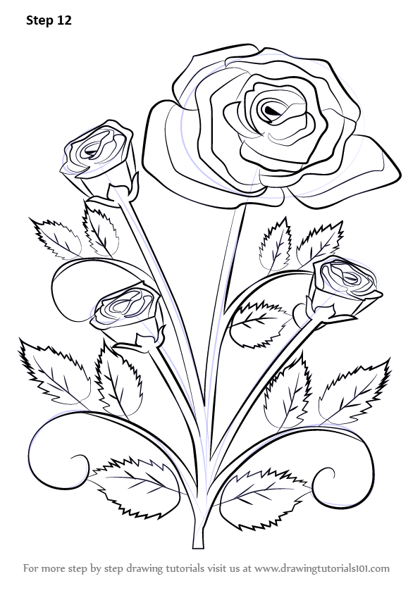 Learn how to draw a rose plant rose step by step drawing tutorials - Planting rose shrub step ...