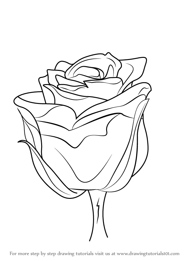 Learn How to Draw a Rose with Stem (Rose) Step by Step ...
