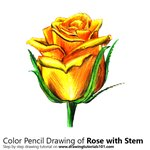 How to Draw a Rose with Stem