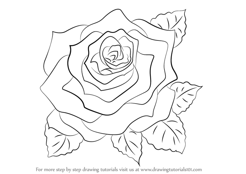 Learn how to draw a rose rose step by step drawing tutorials