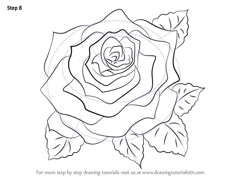 how to draw a rose - 800×566