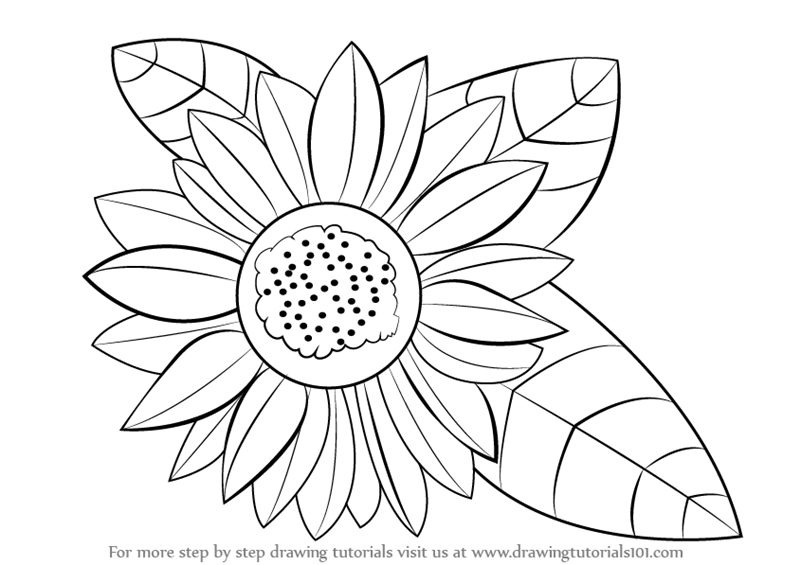 Learn how to draw a sunflower sunflower step by step drawing tutorials