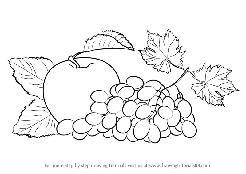 Learn How To Draw Grapes And Apple Fruits Step By Drawing Tutorials