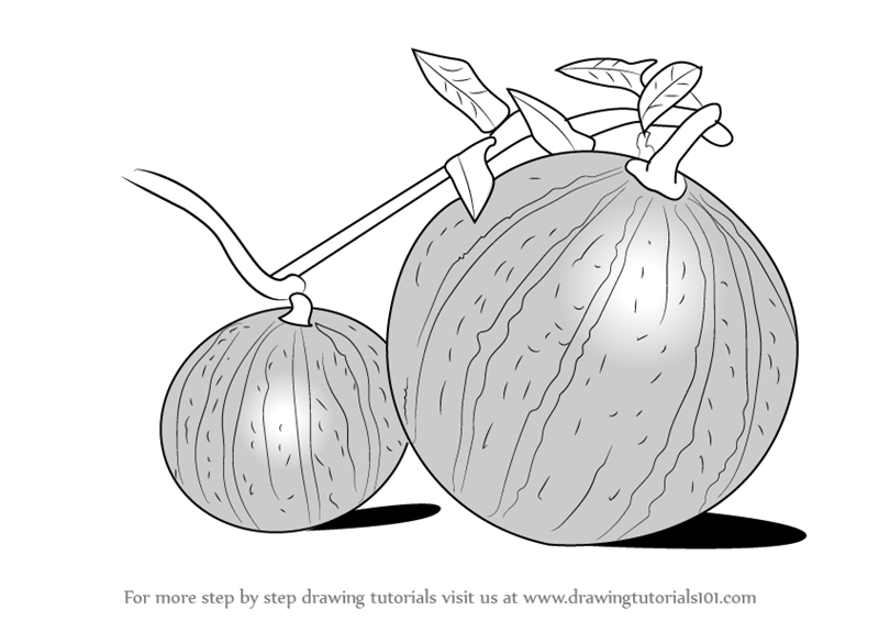 Learn how to draw watermelon plant fruits step by step drawing tutorials