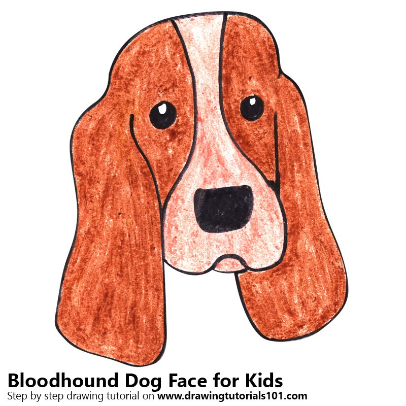 Learn How to Draw a Bloodhound Dog Face for Kids (Animal ...