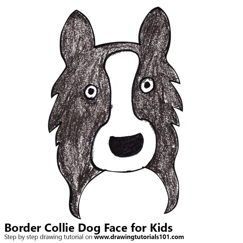 Learn How To Draw A Border Collie Dog Face For Kids Animal Faces