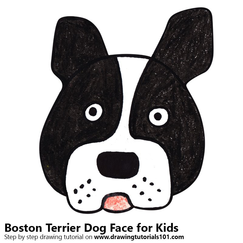 Learn How to Draw a Boston Terrier Dog Face for Kids ...