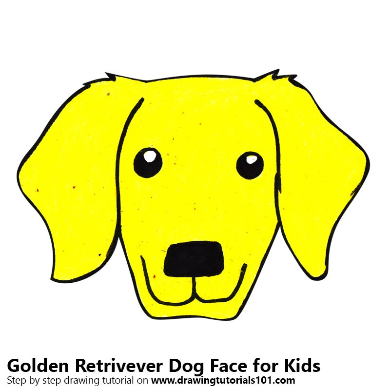 Learn How To Draw A Golden Retrivever Dog Face For Kids Animal