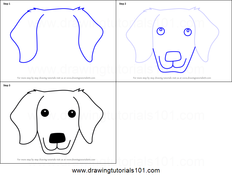 How To Draw A Golden Retrivever Dog Face For Kids Printable Step By