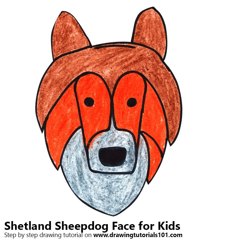 Learn How To Draw A Shetland Sheepdog Face For Kids Animal Faces