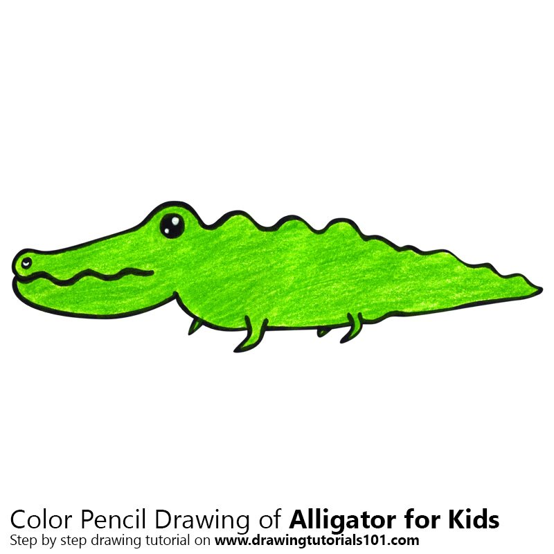 Learn how to draw an alligator for kids animals for kids for Easy to draw crocodile