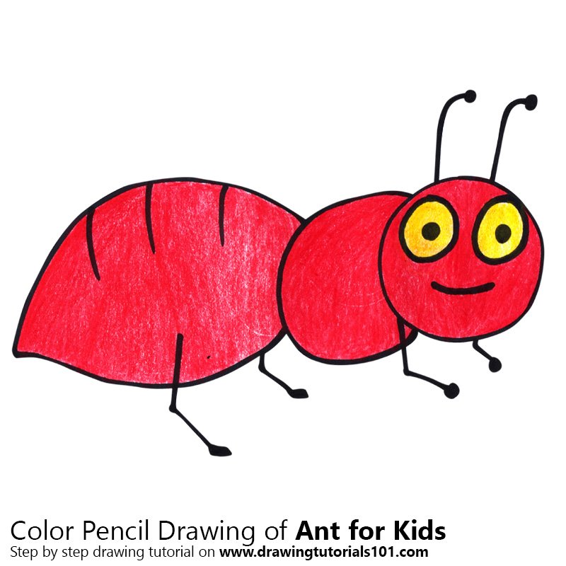 Learn How To Draw An Ant For Kids Animals For Kids Step By Step