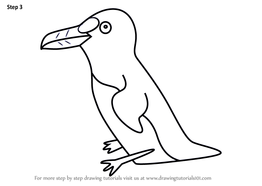 Learn How To Draw An Auk Bird For Kids Animals For Kids Step By