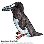 How to Draw an Auk Bird for Kids