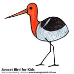 How to Draw an Avocet Bird for Kids