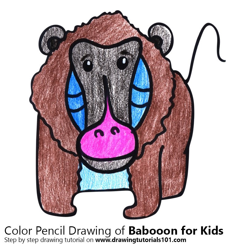 Baboon for Kids Color Pencil Drawing