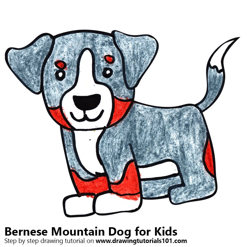 Learn How To Draw A Bernese Mountain Dog For Kids Animals For
