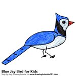 How to Draw a Blue Jay Bird for Kids