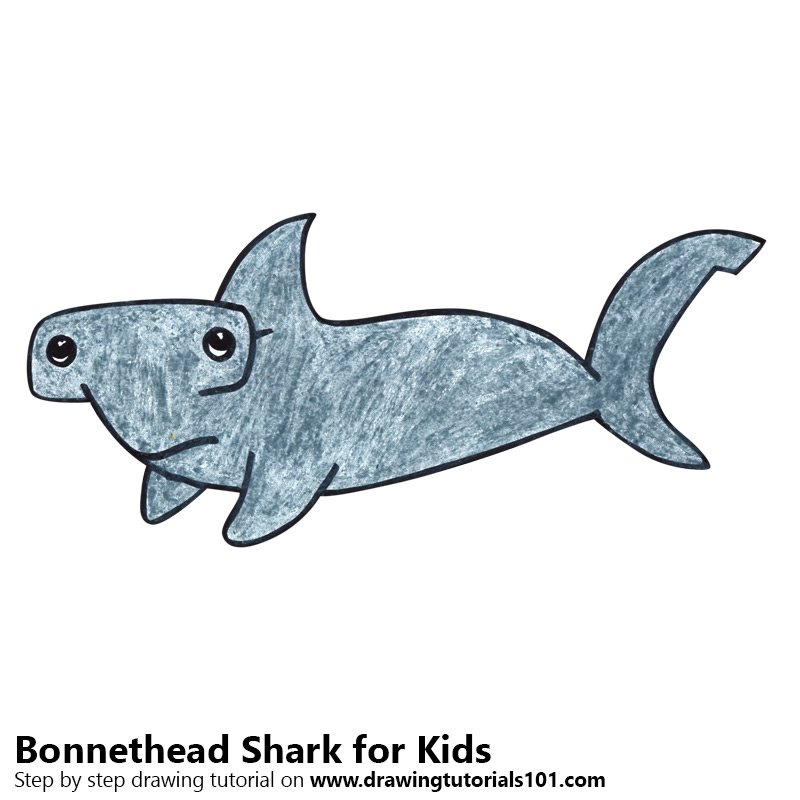 Learn How To Draw A Bonnethead Shark For Kids Animals For Kids