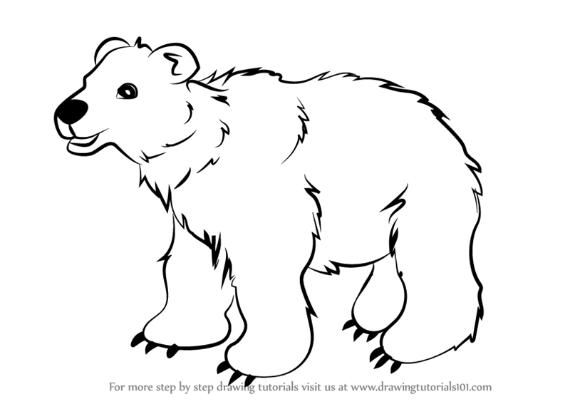 Learn How To Draw Brown Bear For Kids Animals For Kids Step By