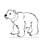 How to Draw Brown Bear for Kids