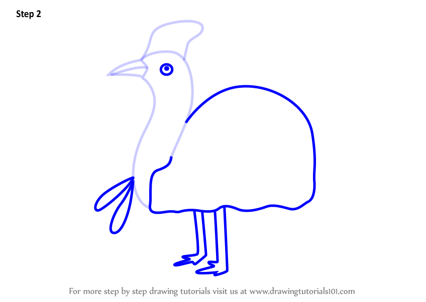 how to draw a cassowary