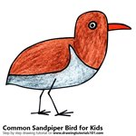 How to Draw a Common Sandpiper Bird for Kids