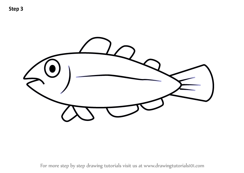 learn how to draw a cool fish for kids animals for kids