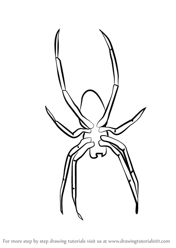 Learn How To Draw Garden Spider For Kids Animals For Kids