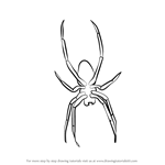 How to Draw Garden Spider for Kids