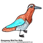 How to Draw a Garganey Bird for Kids
