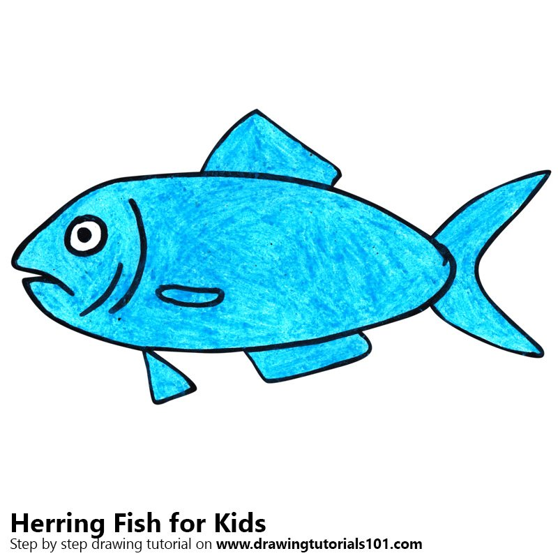 Learn How To Draw A Herring Fish For Kids Animals For Kids Step By
