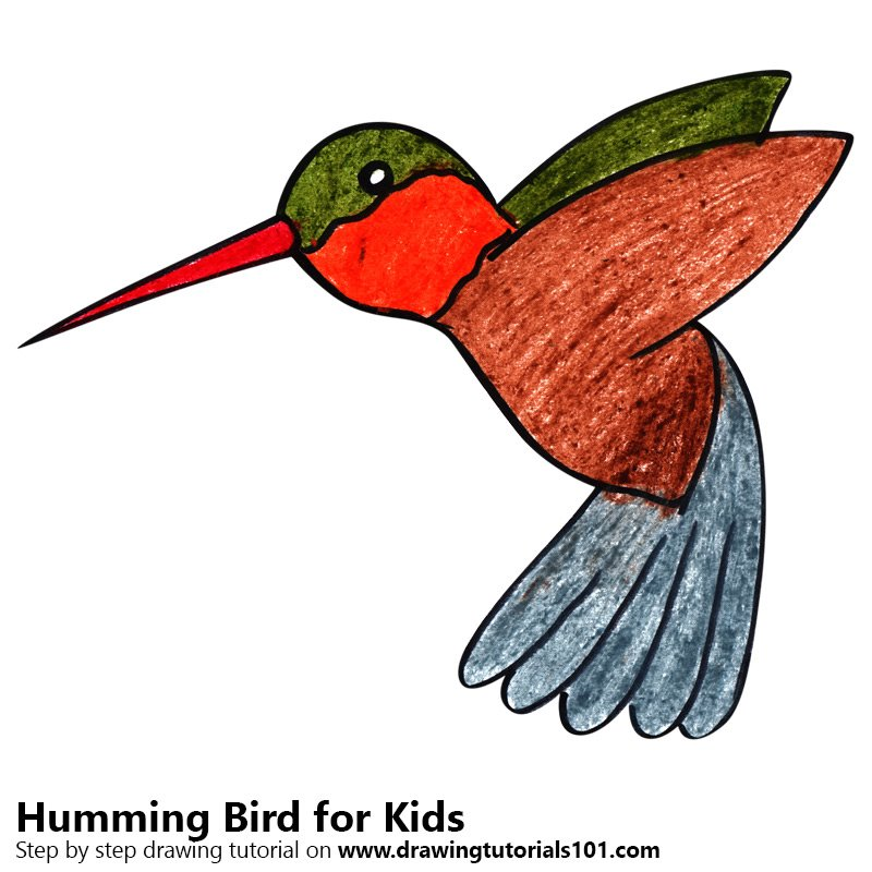 Rufous hummingbird drawing - photo#42