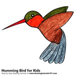 How to Draw a Hummingbird for Kids