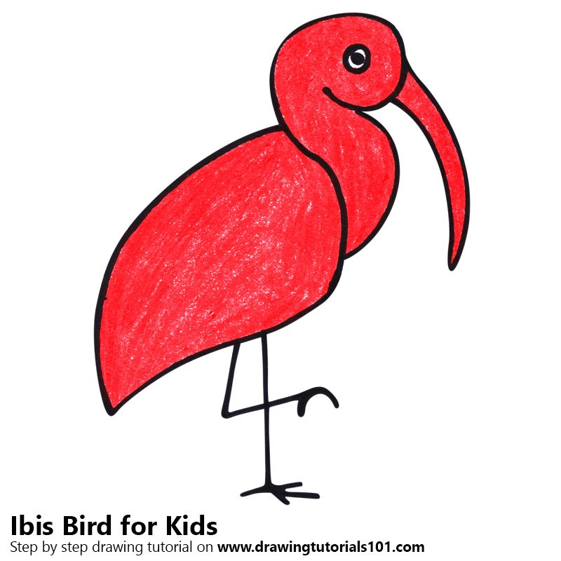 Step By Step How To Draw A Ibis Bird For Kids Drawingtutorials101 Com