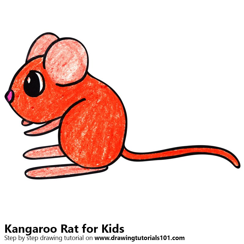 Learn How To Draw A Kangaroo Rat For Kids Animals For Kids