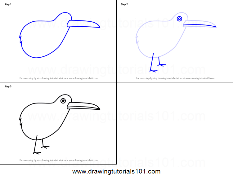 How To Draw A Kiwi Bird For Kids Printable Step By Step Drawing