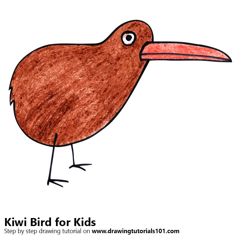 Learn How To Draw A Kiwi Bird For Kids Animals For Kids Step By Step Drawing Tutorials