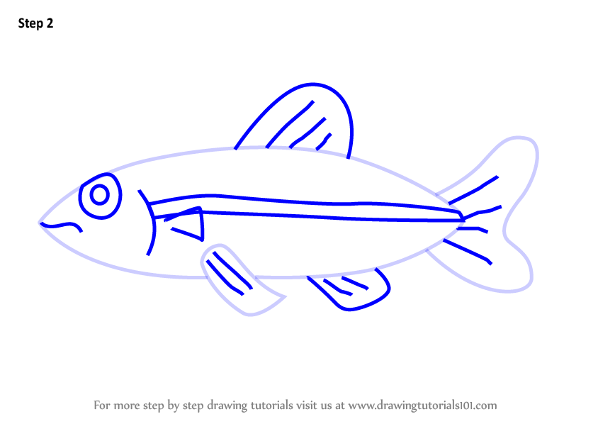 Learn How To Draw A Minnow Fish For Kids Animals For Kids