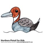How to Draw a Northern Pintail for Kids