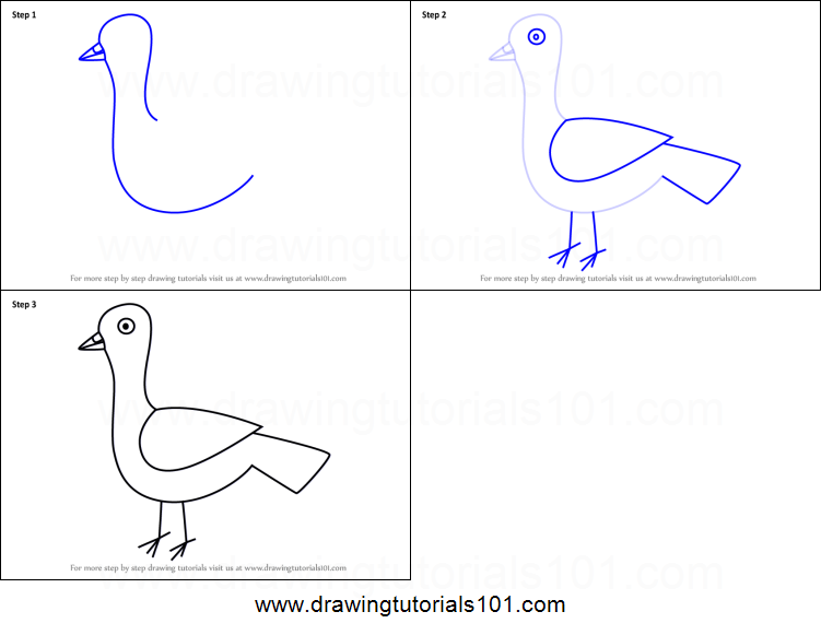 How To Draw A Pigeon For Kids Printable Step By Step Drawing Sheet