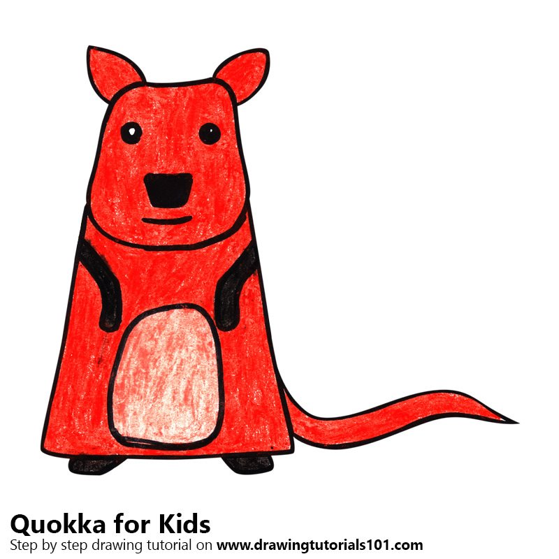 Learn How To Draw A Quokka For Kids (Animals For Kids
