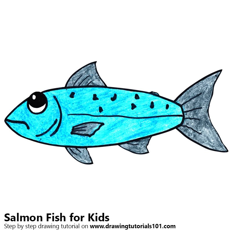 Learn How To Draw A Salmon Fish For Kids Animals For Kids Step By