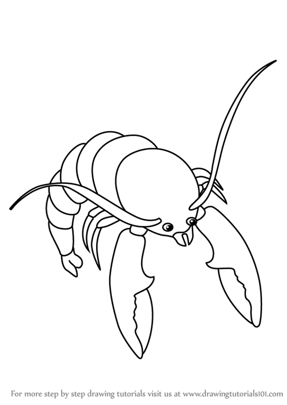 Learn How To Draw Shrimp For Kids Animals For Kids Step By Step